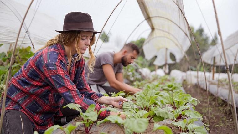 5 obstacole în calea asocierii fermierilor români