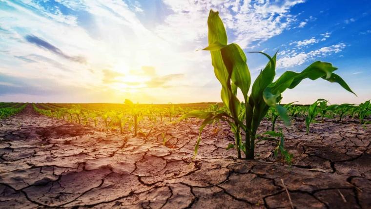 Drama prin care trece fermierul român